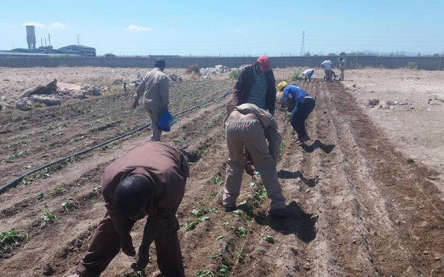"""""""Farming is just the most fulfilling activity there is... and its especially wonderful to work with a team of people who are committed and enthusiastic""""   Brian Joffin"""