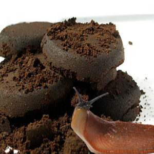 Coffee-ground-as-a-pesticide-300x300