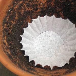 Use-coffee-filters-in-flowerpots-300x300